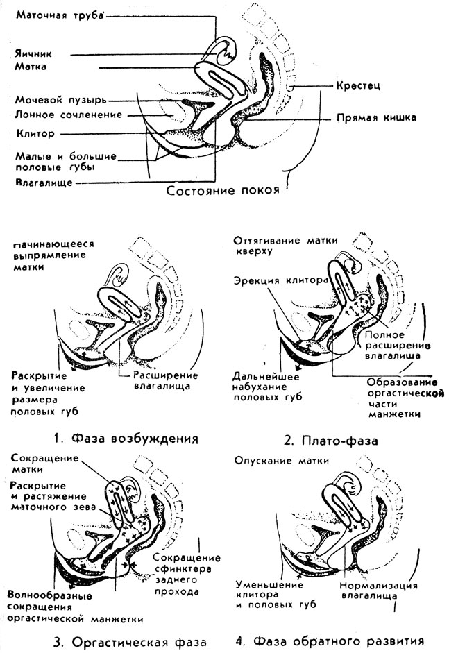 ottyagivaet-polovie-gubi-i-klitor